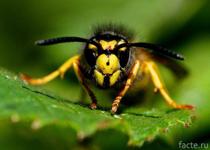 насекомое вблизи
