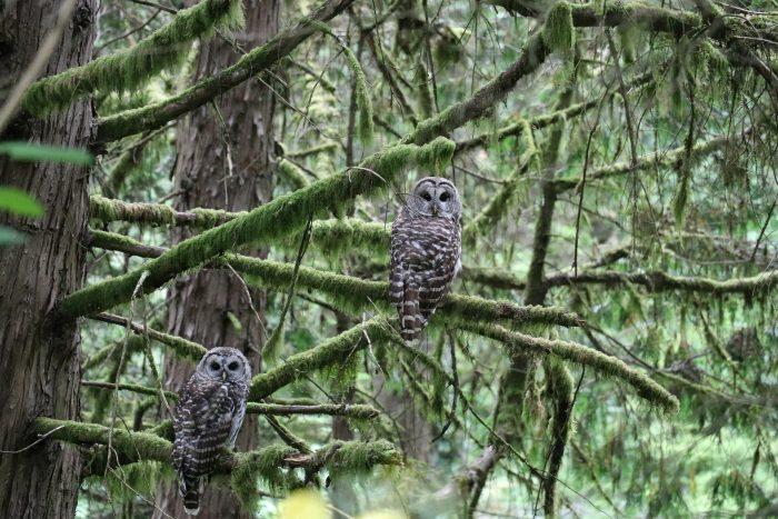 Portland Oregon лес