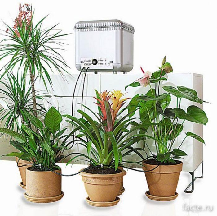 автономный полив растений