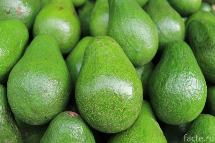 авокадо плоды