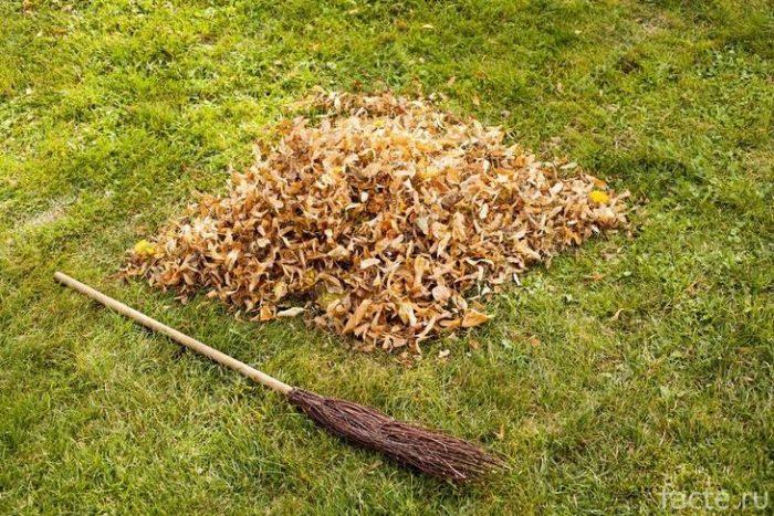 листья в куче