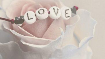 роза и любовь