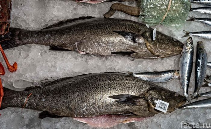 тотоаба рыба