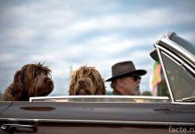 водитель и собаки