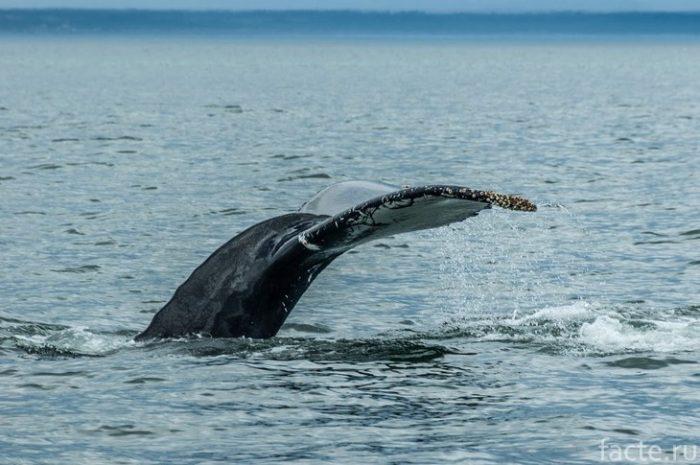 Saguenay St Lawrence Marine Park