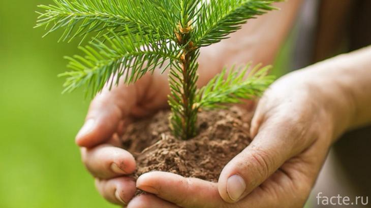 посадка деревье
