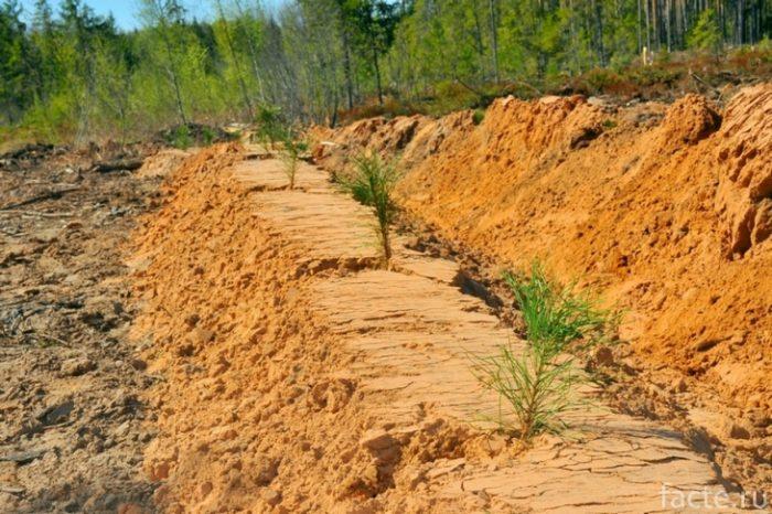 лесовосстановление