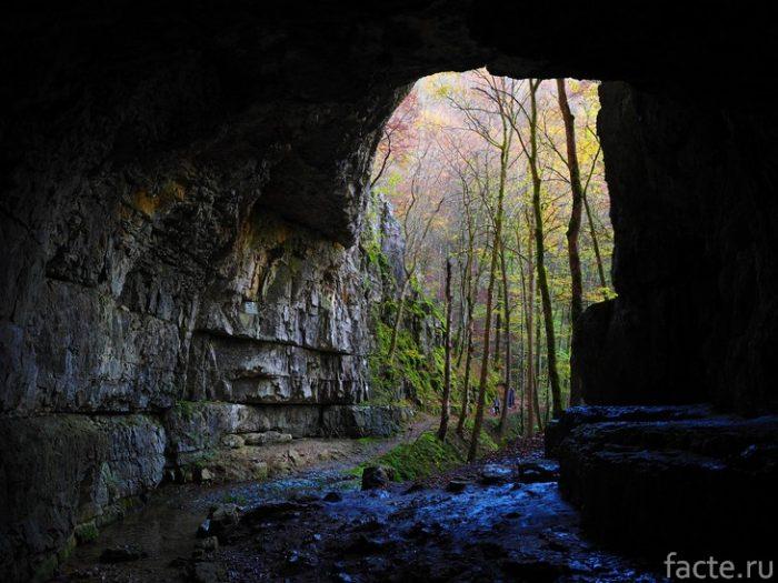 пещера и деревья