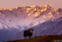 тибет природа
