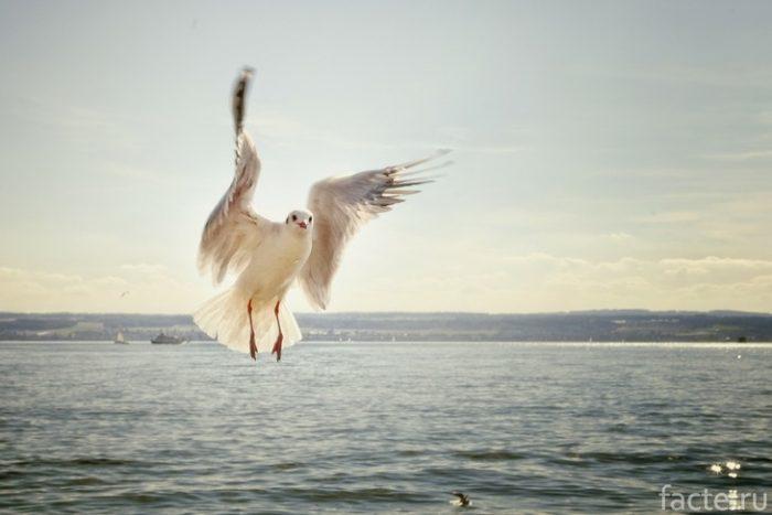 чайка у озера