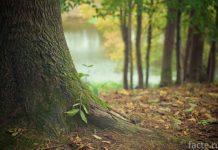 дерево корни