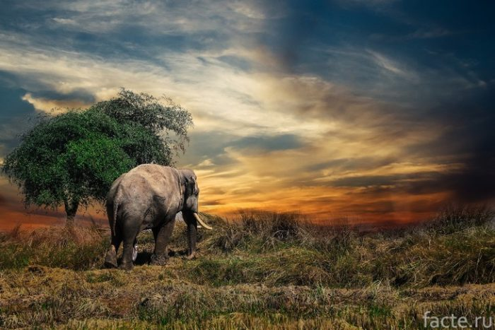 слон и дерево