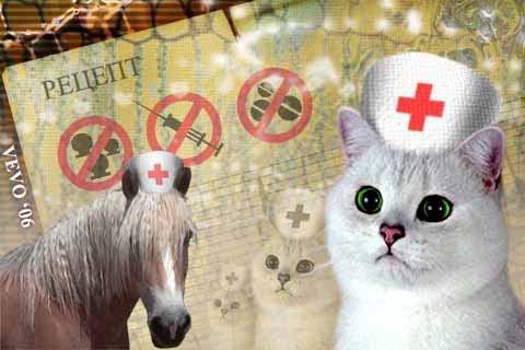 25z Зоотерапия   лучшее лекарство от стресса
