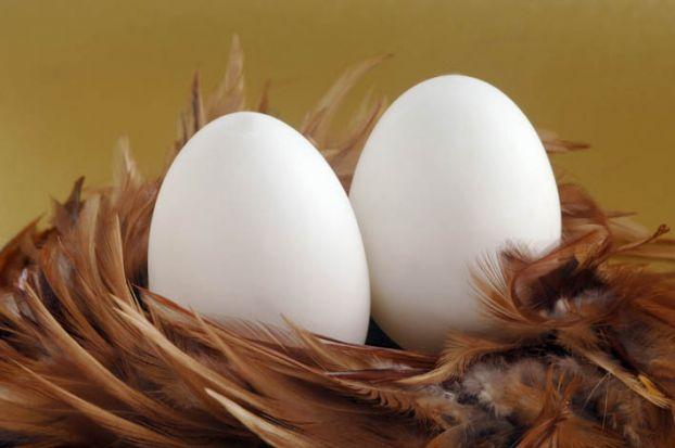 48d Мифы о яйцах