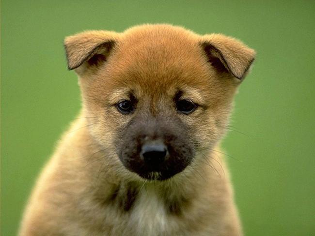 88c Можно ли целовать домашних животных?