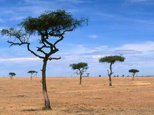 afrika 300x225 Все языки мира произошли из Африки