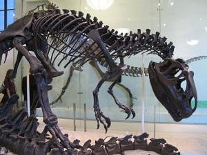 Кости динозавров в музеях — это на самом деле не кости