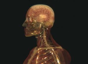 humanbody21 300x218 10 фактов о человеческом теле