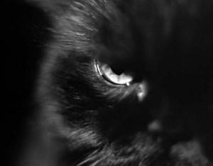 koshka 300x234 Самые страшные факты о кошках