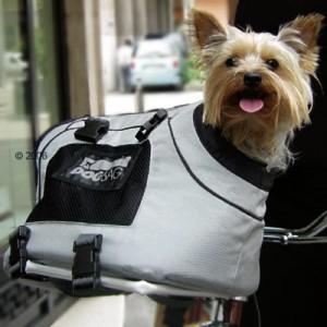modas 300x300 Откуда пошла мода таскать с собой маленьких собачек