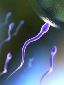 sperma-225x300.jpg (225×300)
