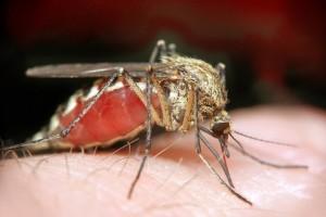 komar 300x200 Почему чешется комариный укус?