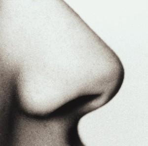 nose 300x296 Форма носа и сексуальный темперамент