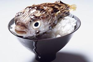 fugu 300x200 7 запрещенных продуктов