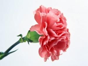 Почему живым дарят нечетное количество цветов, а мертвым   четное?