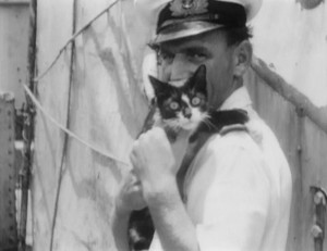 Кот Саймон   кот герой