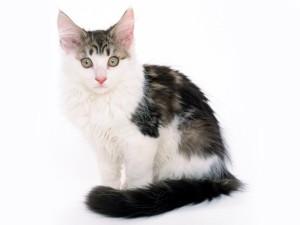 Что кошки думают о людях?