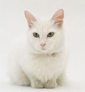 Почему кошки облизывают людей?