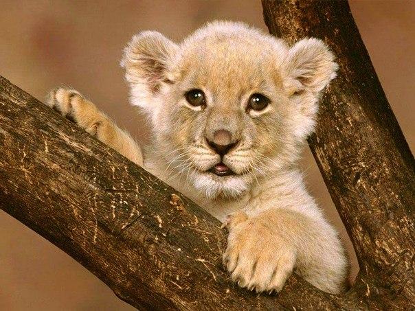 25 коротких фактов о животных