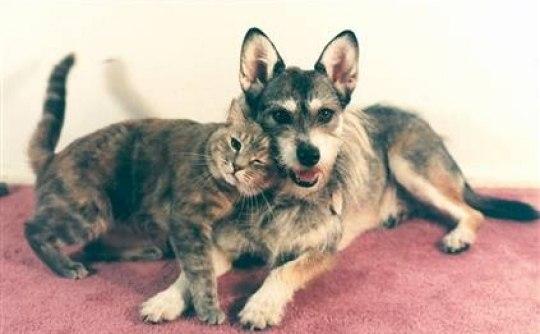 В Америке жила собака, которая всю жизнь спасала кошек