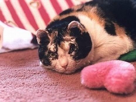 Скарлетт – это не просто кошка