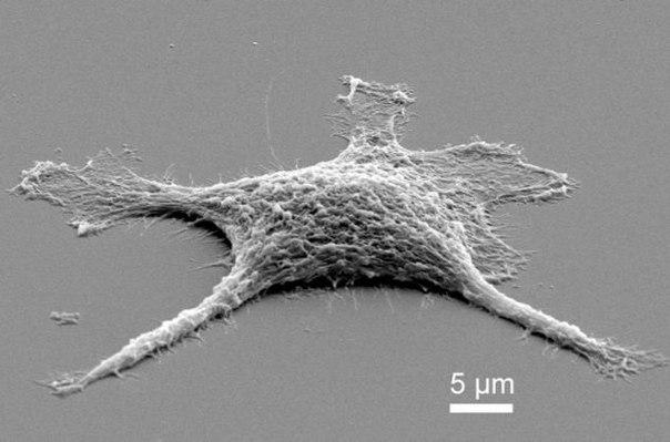 Как работают клетки многоклеточного организма - 85b