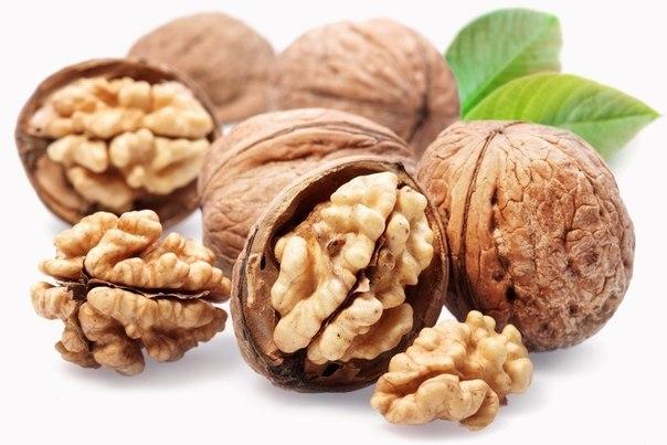 Грецкий орех   пища для ума