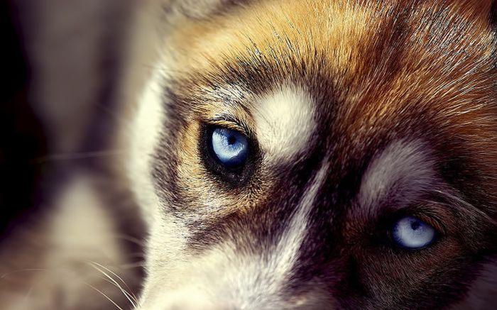 ТОП 5 невероятных способностей собак