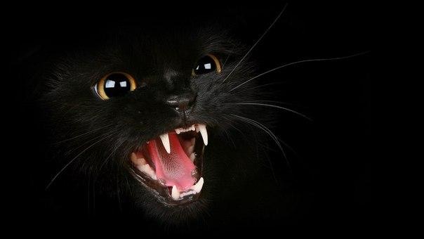 3 факта о кошках, которые вы не знали