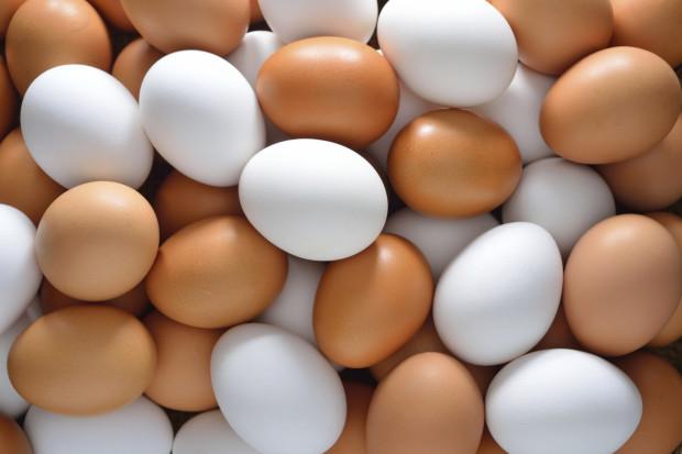 Яйца, яичный порошок (желток и белок) и яичный меланж