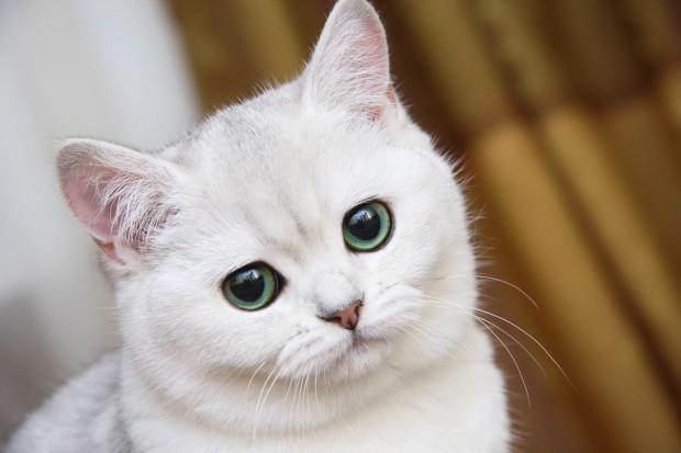 У кошек и собак есть шестое чувство — ультрафиолетовое зрение