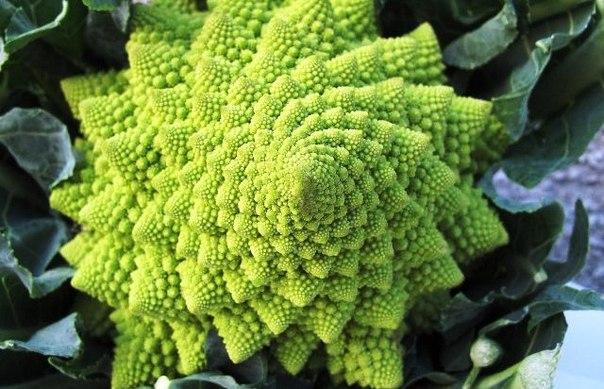 Почему капуста романеско — самый красивый овощ в мире?