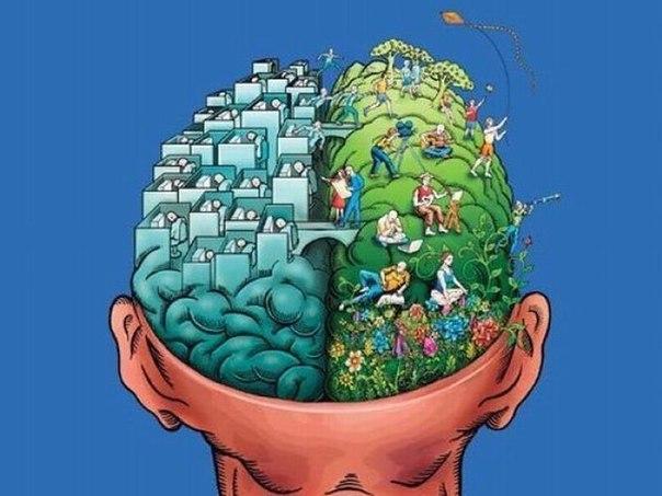 Одно полушарие мозга не может быть развито больше, чем другое