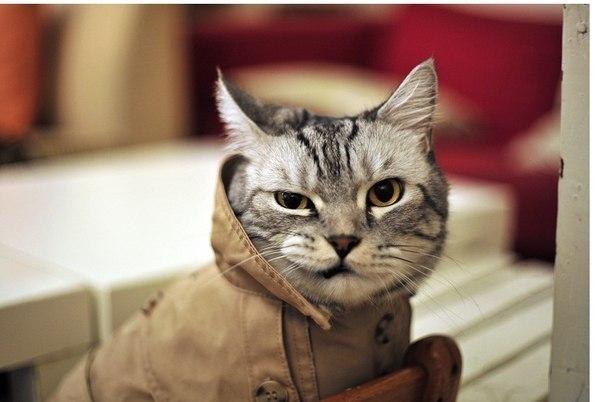5 самых известных котов-убийц