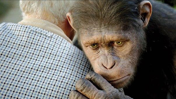 С научной точки зрения люди и животные равны