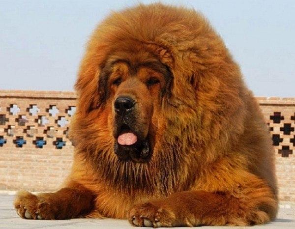 Собака   дороже бриллиантов!