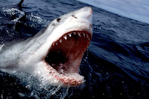Если акулу извлечь из воды, она будет раздавлена собственным весом