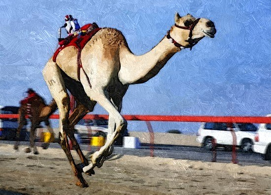 До начала 21 века в Саудовской Аравии в качестве жокеев на верблюжьих скачках использовались дети-рабы