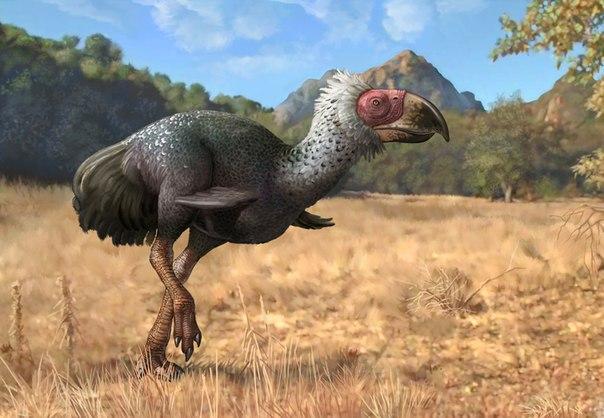 Титанис вымершая хищная птица, которая питалась бизонами