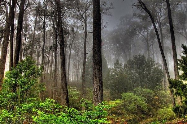 Девять интересных фактов о лесе